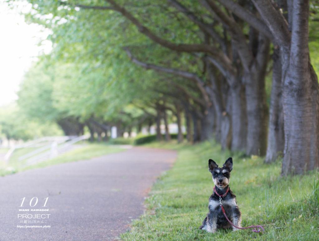 木の下にいる犬