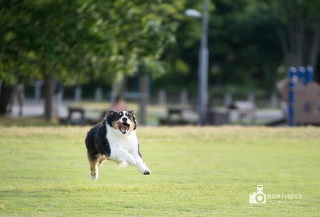 disk-dog