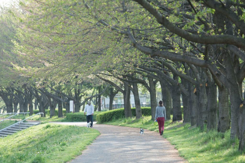 川越水上公園の並木道